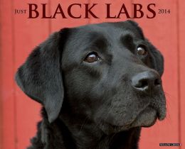 2014 Black Labs Wall Calendar