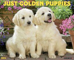 2014 Golden Puppies Wall Calendar