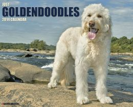 Goldendoodles 2013 Wall Calendar Willow Creek Press