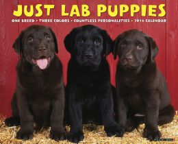2014 Lab Puppies Wall Calendar