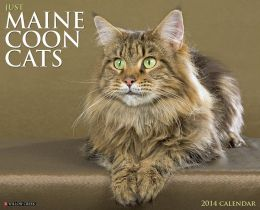 2014 Maine Coon Cats Wall Calendar