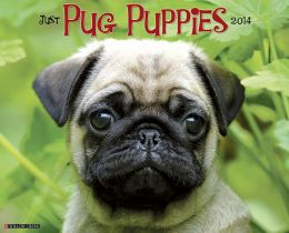 2014 Pug Puppies Wall Calendar