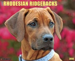 Just Rhodesian Ridgebacks 2014 Calendar