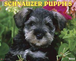 2014 Schnauzer Puppies Wall Calendar