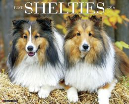 2014 Shelties Wall Calendar