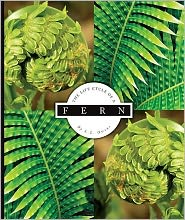 The Life Cycle of a Fern