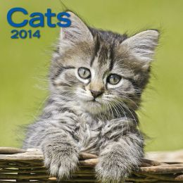 2014 Cats Mini Wall Calendar