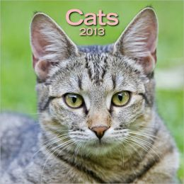 2013 Cats Wall Calendar