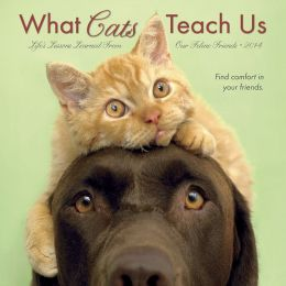 2014 What Cats Teach Us Mini Wall Calendar