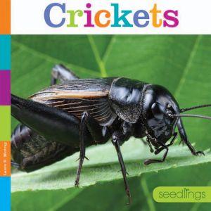 Crickets: Seedlings