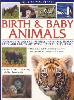 Wild Animal Planet: Birth and Baby Animals: Compare the way reptiles, mammals, sharks, birds and insects are born, find out about the amazing way new life survives and adapts in the wild