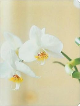 Orchid Mini Notebook