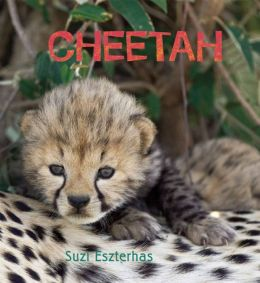 Eye on the Wild: Cheetah