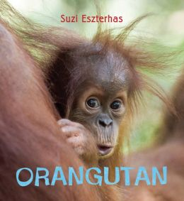 Eye on the Wild: Orangutan