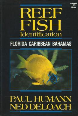 Reef Fish Identification Florida Caribbean Bahamas