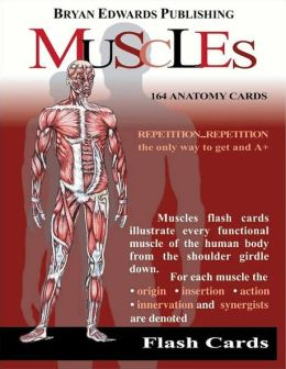 Muscles: Flash Cards