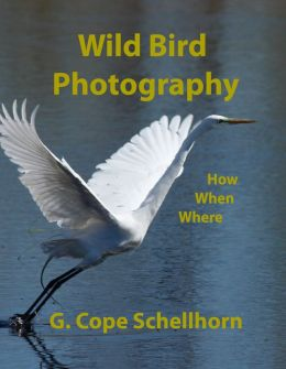 Wild Bird Photography: How, When, Where