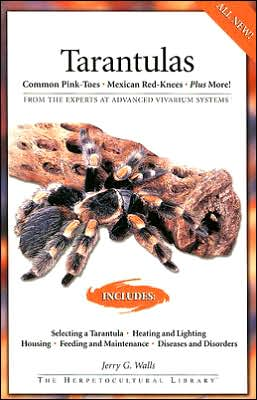 Tarantulas: Common Pink-Toes, Mexican Red-Knees, Plus More!
