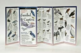 Ultimate Guide to Sanibel Captiva Birds