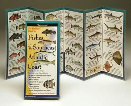 The Ultimate Guide to Fishes of the Southeast Atlantic Coast