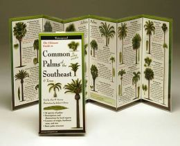 The Ultimate Guide to Common Palms of the Southeast & Texas