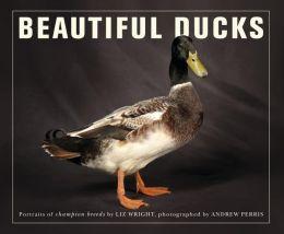 Beautiful Ducks