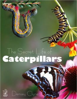 Secret Life of Caterpillars