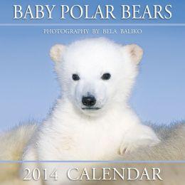 2014 Baby Polar Bears Mini Wall Calendar