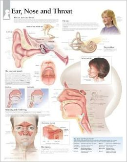 Ear, Nose & Throat chart