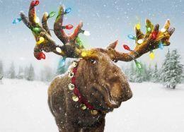 MERRY CHRISTMOOSE CHRISTMAS BOXED CARD