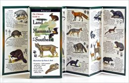 The Ultimate Guide to Land Mammals of the Southeast