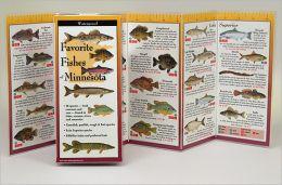 Favorite Fishes of Minnesota