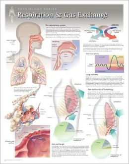 Respiration & Gas Exchange Wall Chart: 8130