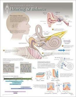 Hearing & Balance Wall Chart: 8210