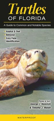 Turtles of Florida: A Guide to Common and Notable Species