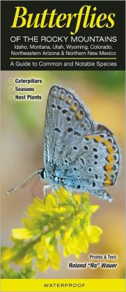 Butterflies of the Rocky Mountains: A Guide to Common and Notable Species