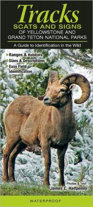 Tracks, Scats and Signs of Yellowstone and Grand Teton National Parks: A Guide to Identification in the Wild