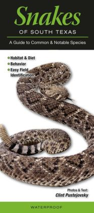 Snakes of South Texas: A Guide to Common and Notable Species