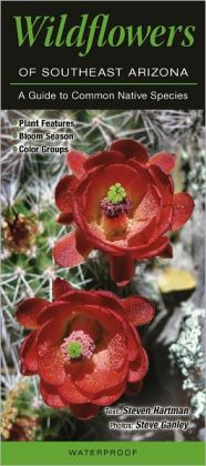 Wildflowers of Southeast Arizona: A Guide to Common Native Species