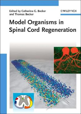 Model Organisms in Spinal Cord Regeneration