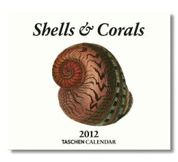 2012 Shells Tear-Off Box Calendar